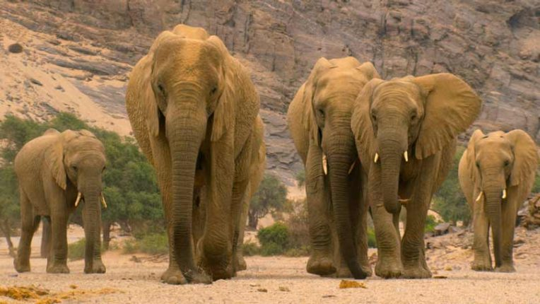 Our Planet II herd of elephants